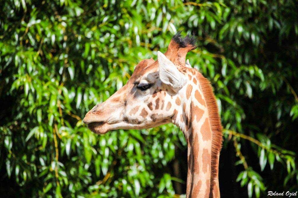 Parc Zoologique de Pont Scorff
