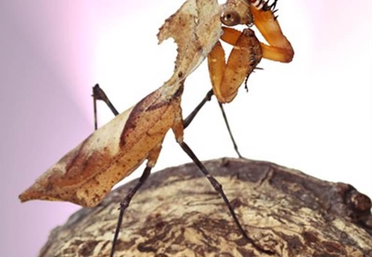 Insectarium de Lizio